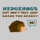 Hedgehogs grey