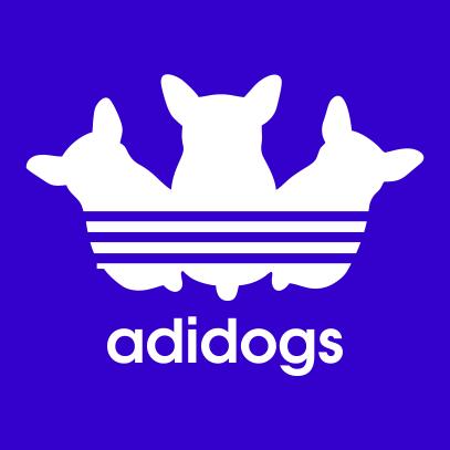 adidogs-royal-blue